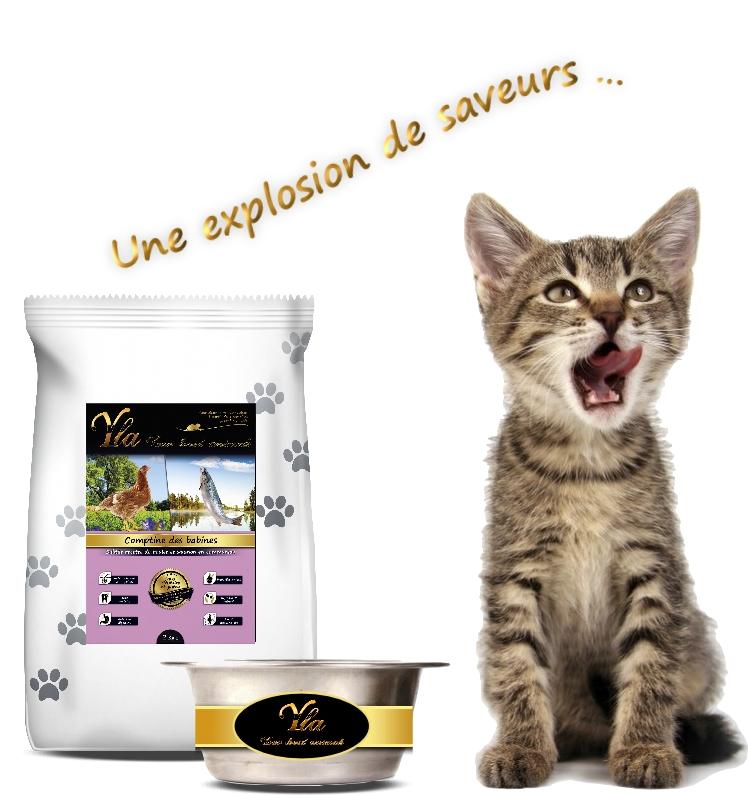 alimentation du chaton la transition alimentaire