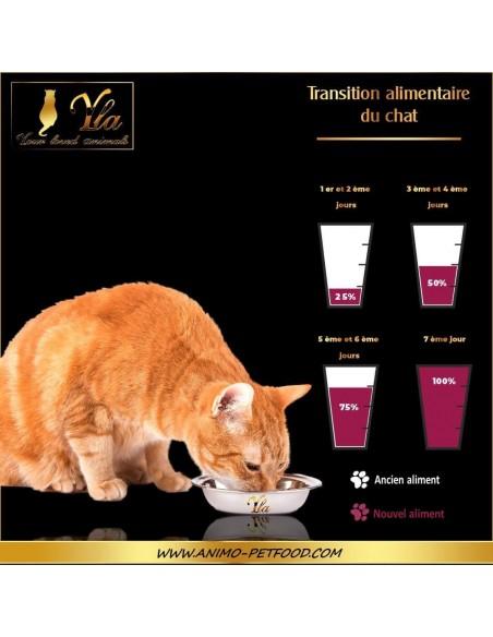 transition-alimentaire-chez-le-chat