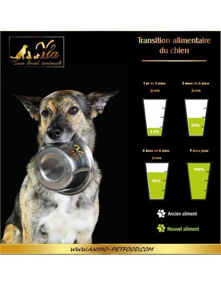 transition-alimentaire-chez-le-chien