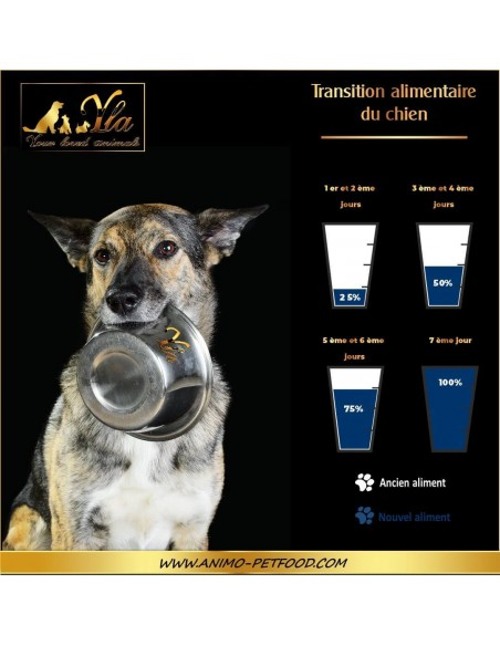 changement-de-regime-alimentaire-du-chien
