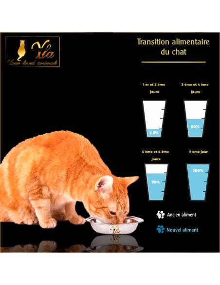 transition-alimentaire-chat