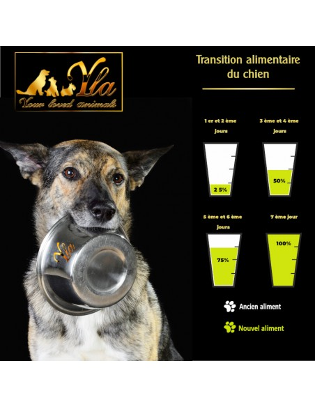 chien-comment-faire-une-transition-alimentaire-parfaite