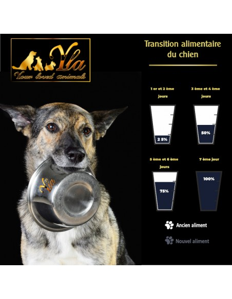 changement-de-nourriture-chien-allergique