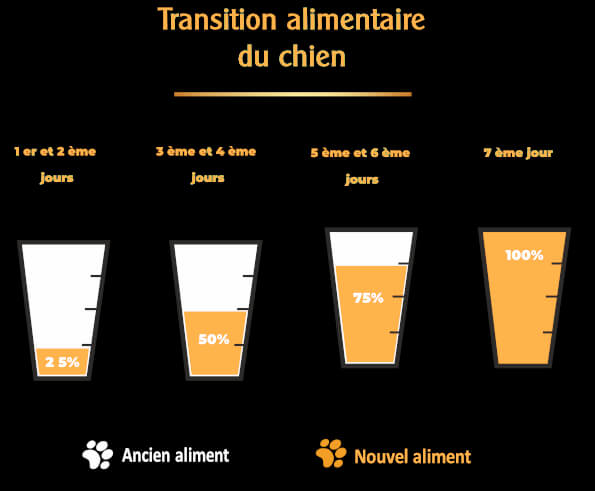 chien-conseils-transition-alimentaire