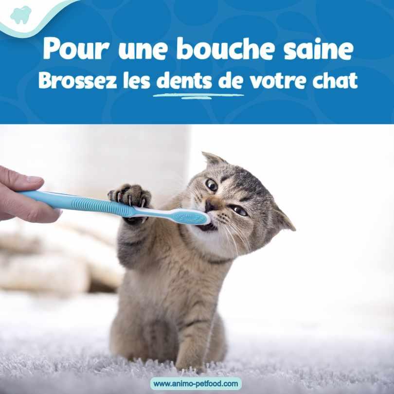 nettoyage dentaire chez le chat