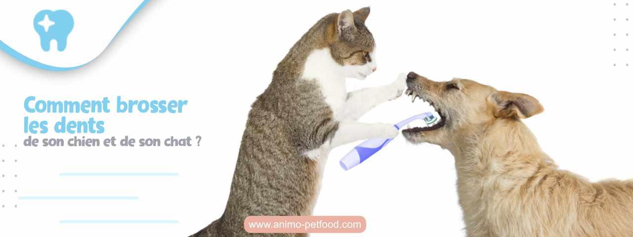 soins dentaires pour les chiens et les chats