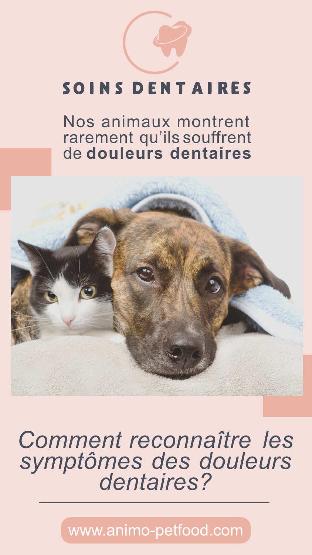 Les problèmes dentaires chez le chien et le chat