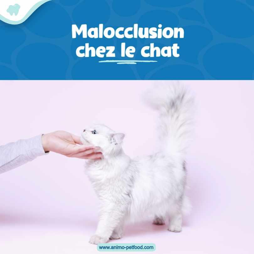 La malocclusion chez le chat