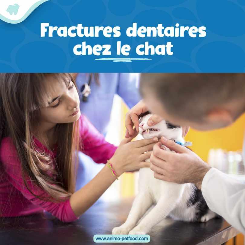 fractures dentaires chez le chat