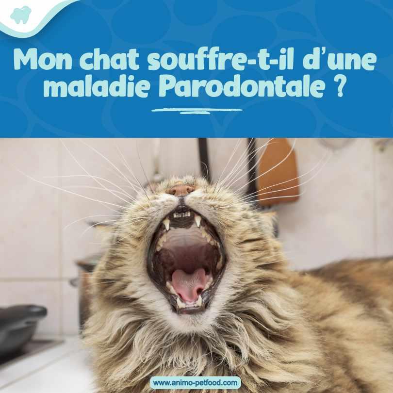 problemes dentaires chez le chat maladie parodontale