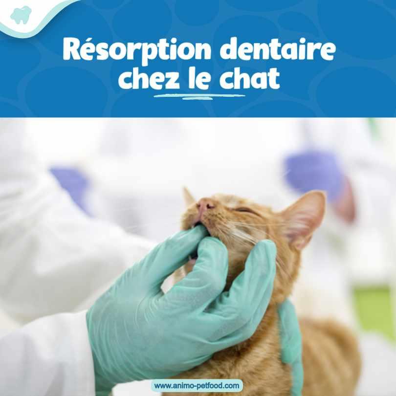 résorption dentaire chez le chat