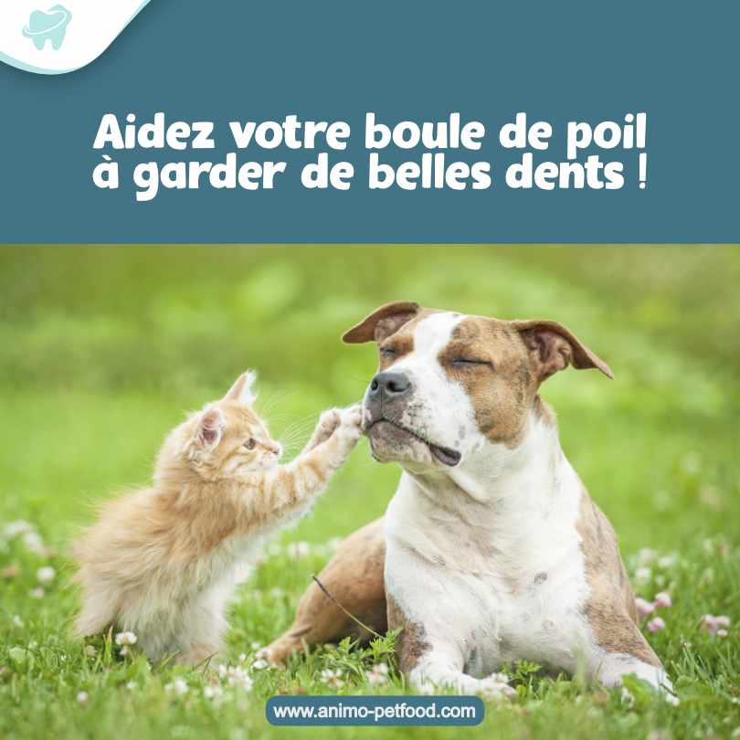 sante dentaire chez le chien et le chat