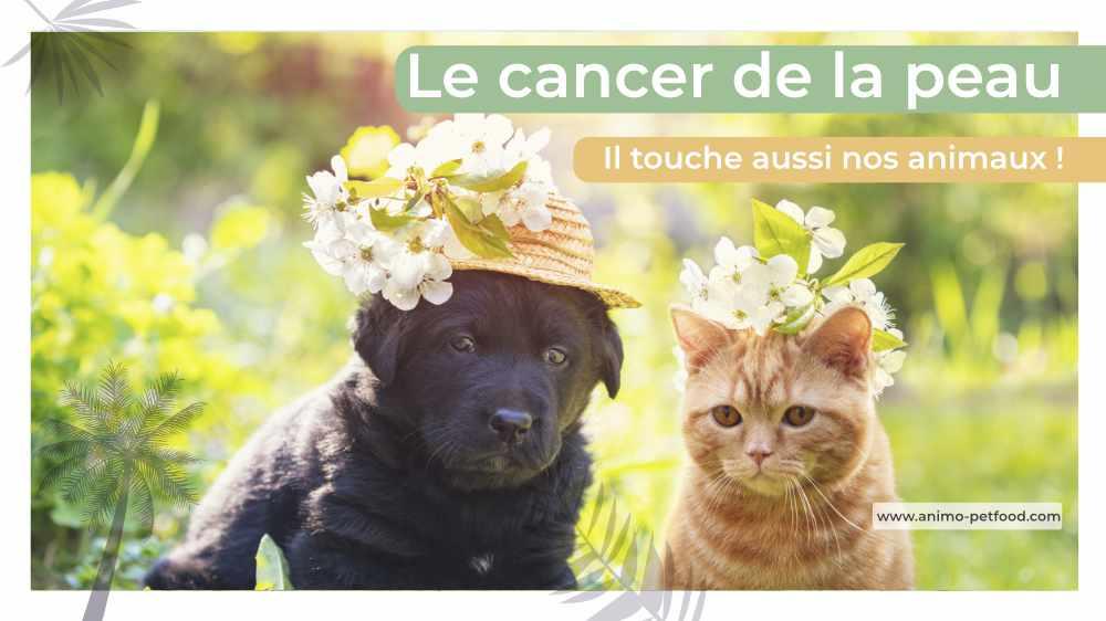 cancer-de-la-peau-chien-et-chat