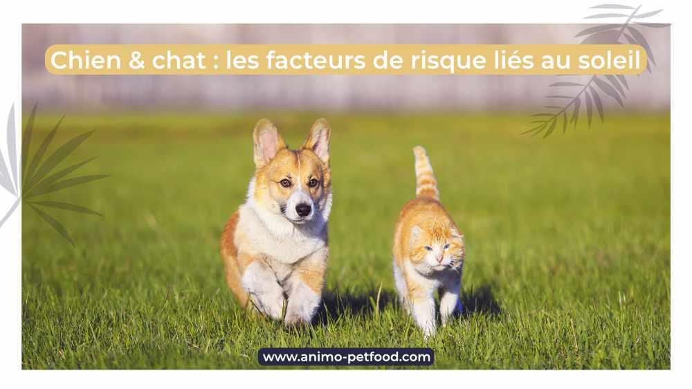 chien-chat-les-facteurs-de-risque-lies-au-soleil