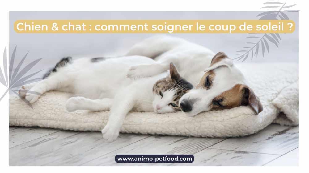 chien et chats comment soigner les coups de soleil