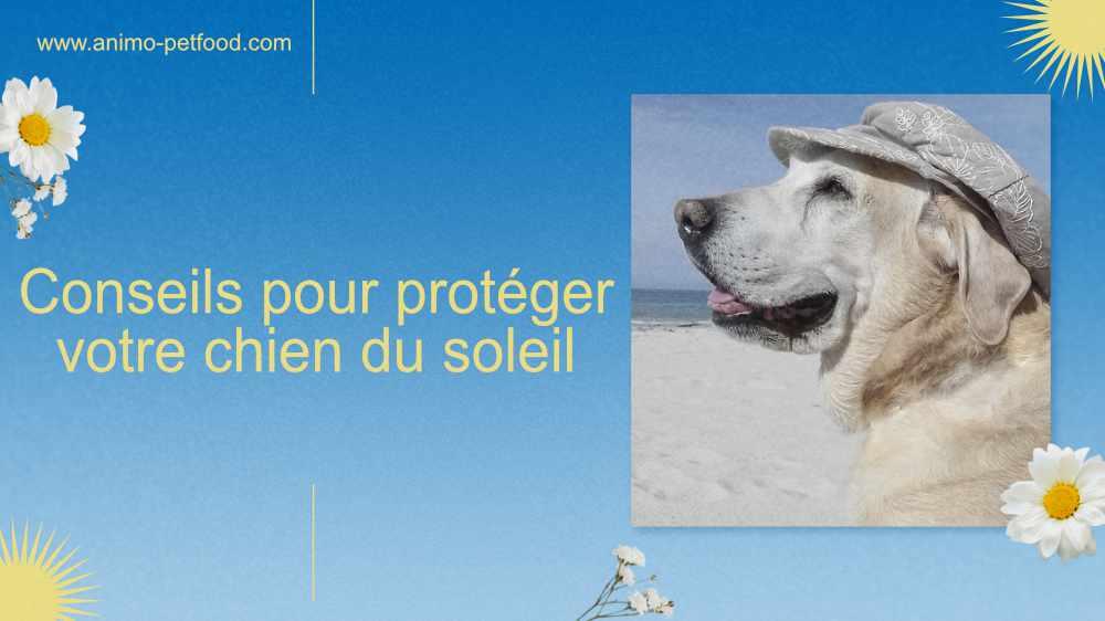 conseils-pour-proteger-votre-chien-du-soleil