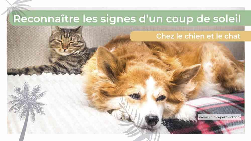 reconnaître les signes d'un coup de soleil chez le chien et le chat