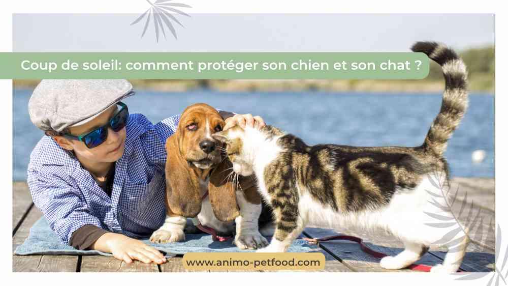 coup-de-soleil-comment-proteger-son-chien-et-son-chat
