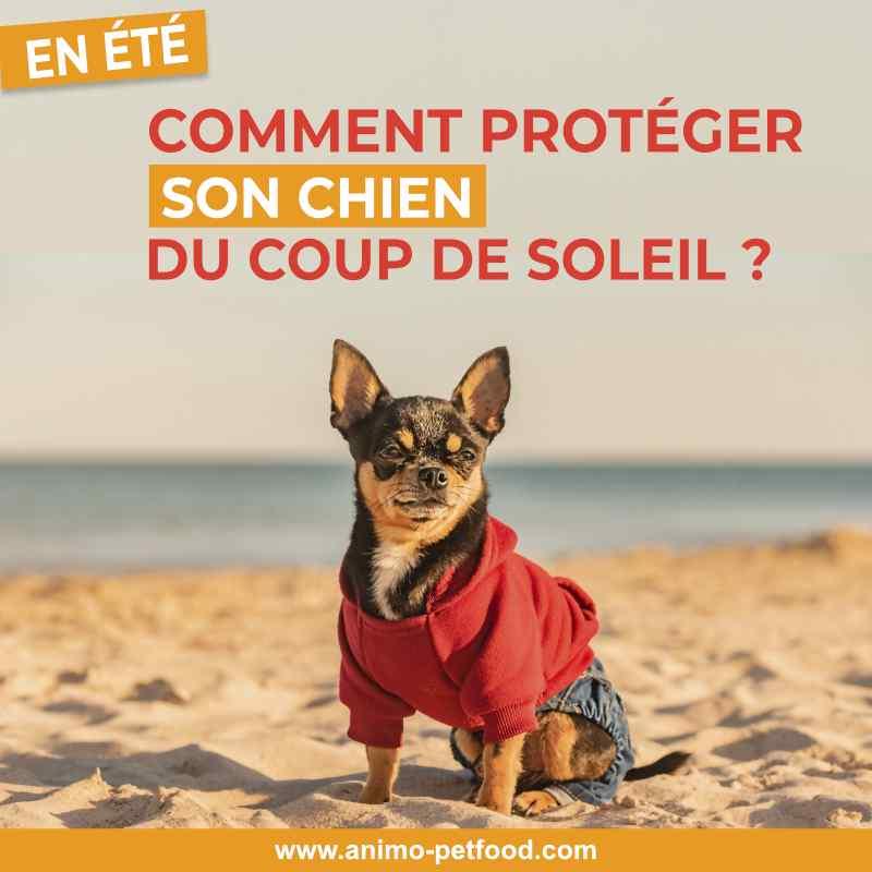 coup-de-soleil-comment-proteger-son-chien