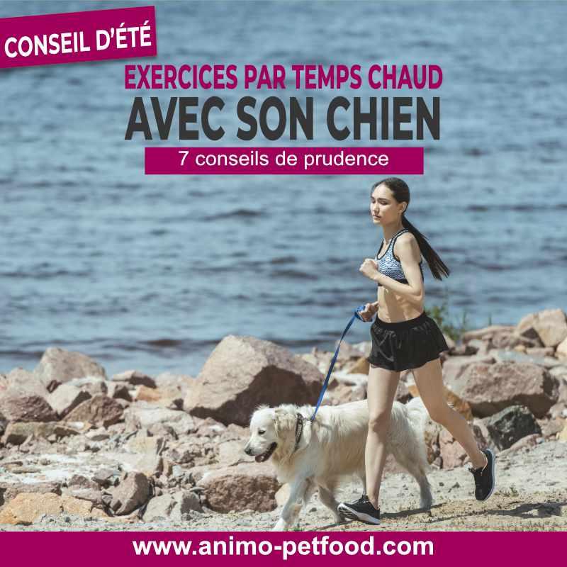 exercice pour chien par temps chaud- chien et chaleur-chien en été-coup de chaleur