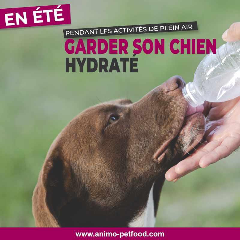 coup de chaleur -exercice pour chien par temps chaud- chien et chaleur-chien en été- exercices en été avec chien- déshydratation du chien