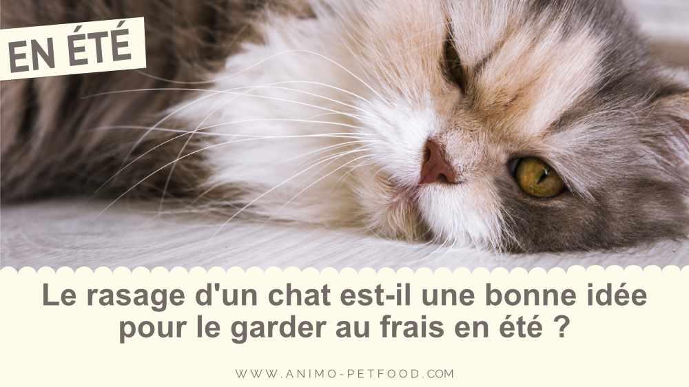 le-rasage-d-un-chat-est-il-une-bonne-idee-pour-le-garder-au-frais-en-ete.