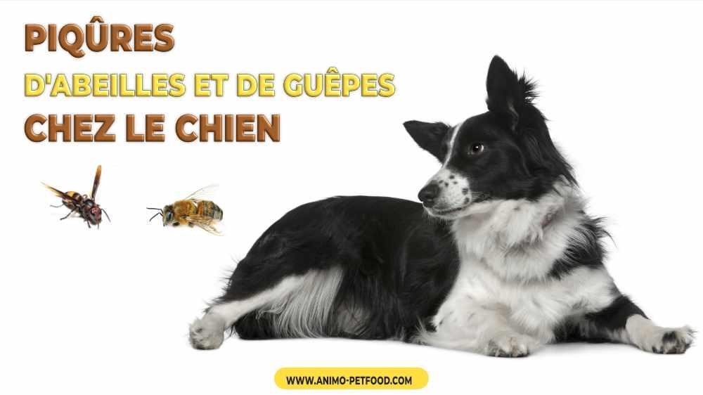 piqures-d-abeilles-et-de-guepes-chez-le-chien