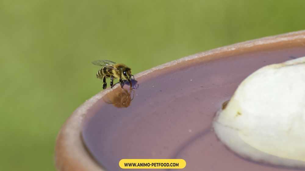 risque-piqures-d-abeilles-et-de-guepes-chez-le-chien