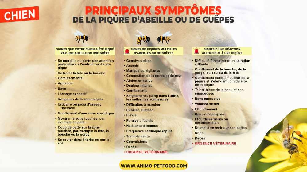 symptômes de la piqûre d'abeille chez le chien
