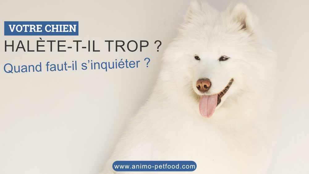 votre chien halète-t-il trop