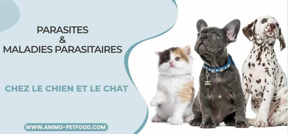 parasites-et-maladies-parasitaires-chez-le-chien-et-le-chat