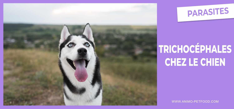 trichocephales-chez-le-chien