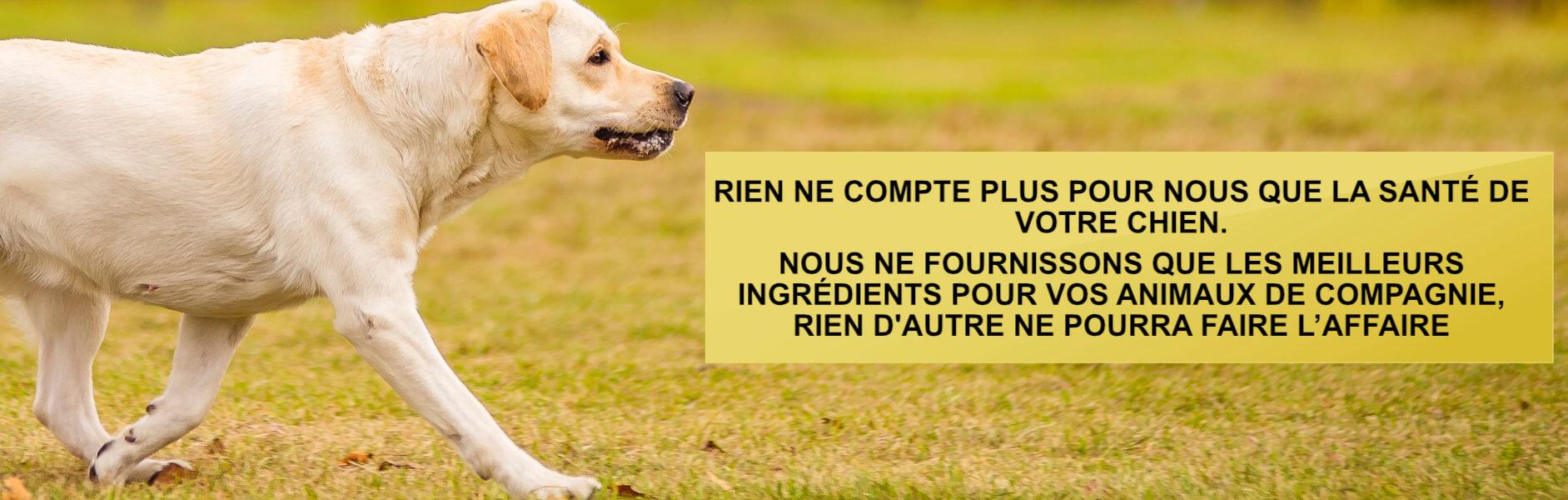nourriture-hypoallergenique-pour-chien-sensible