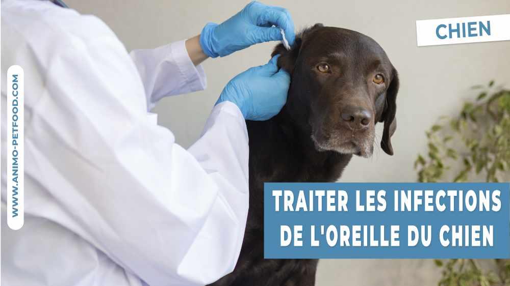conseils-pour-traiter-les-infections-de-l-oreille-du-chien