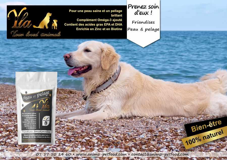 friandises peau et pelage pour chien