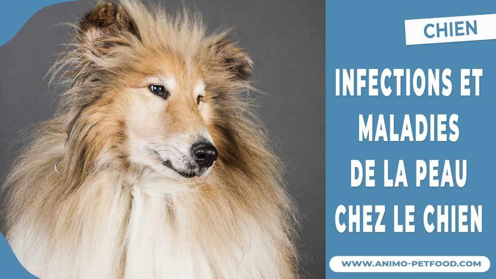 infections-et-maladies-de-la-peau-chez-le-chien