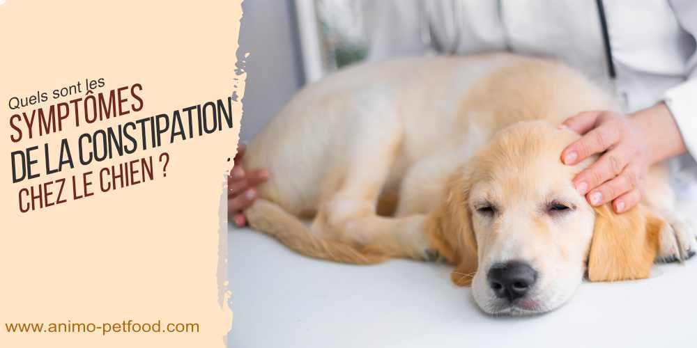 quels-sont-les-symptomes-de-la-constipation-chez-le-chien