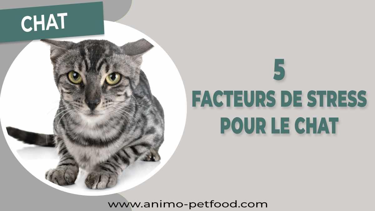 facteurs de stress chez le chat