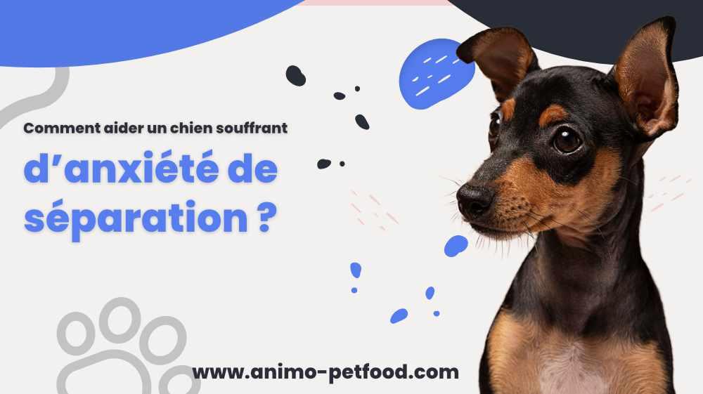 comment-aider-un-chien-souffrant-d-anxiete-de-separation