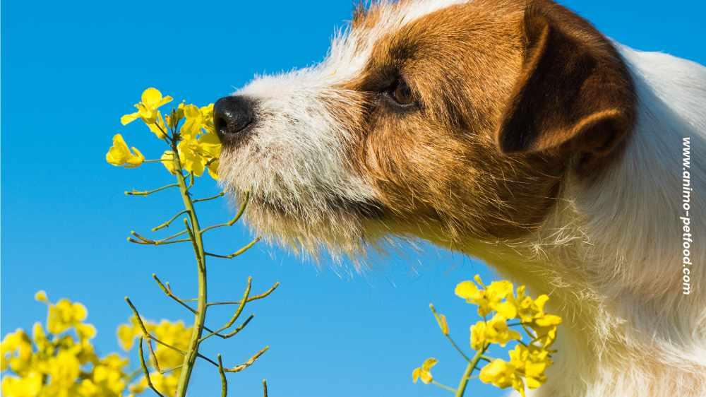promenades-olfactives-pour-les-chiens