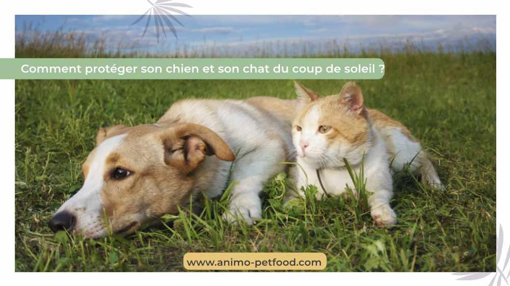 CHIEN-CHAT- Protéger ses animaux de compagnie du soleil -le soleil et le cancer de la peau chez chien et chat