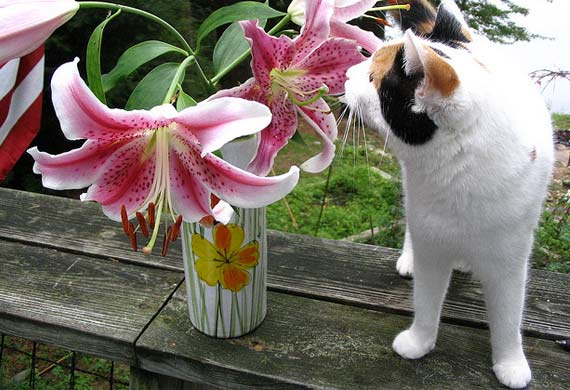 F te de p ques attention votre chien ou votre chat for Plante toxique chien