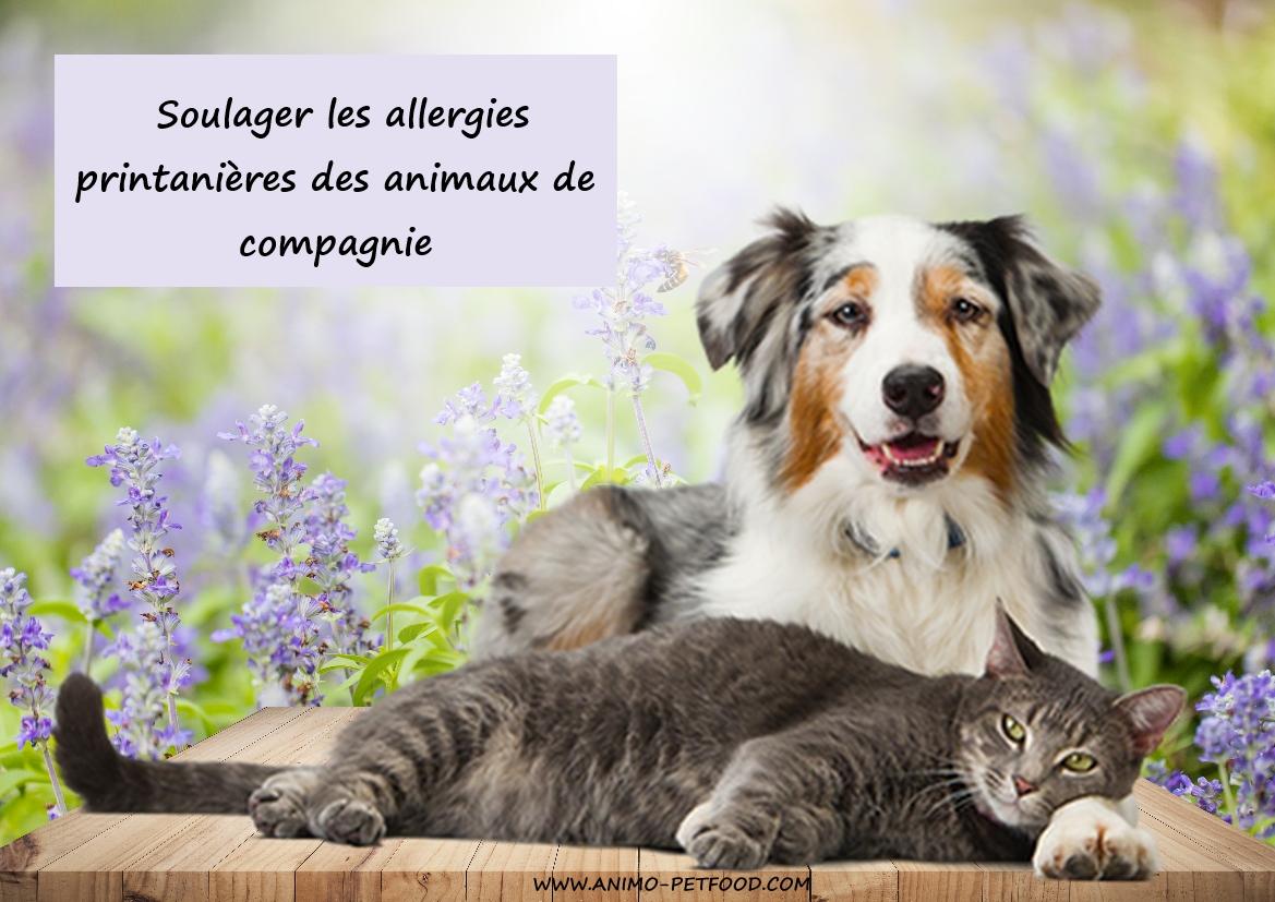 soulager les allergies printani res des animaux de compagnie. Black Bedroom Furniture Sets. Home Design Ideas