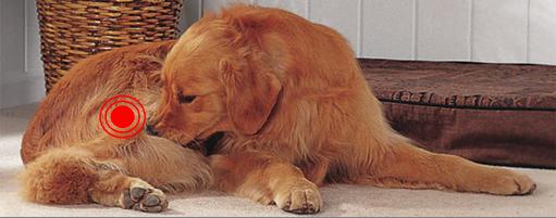 les allergies saisonni res chez le chien. Black Bedroom Furniture Sets. Home Design Ideas