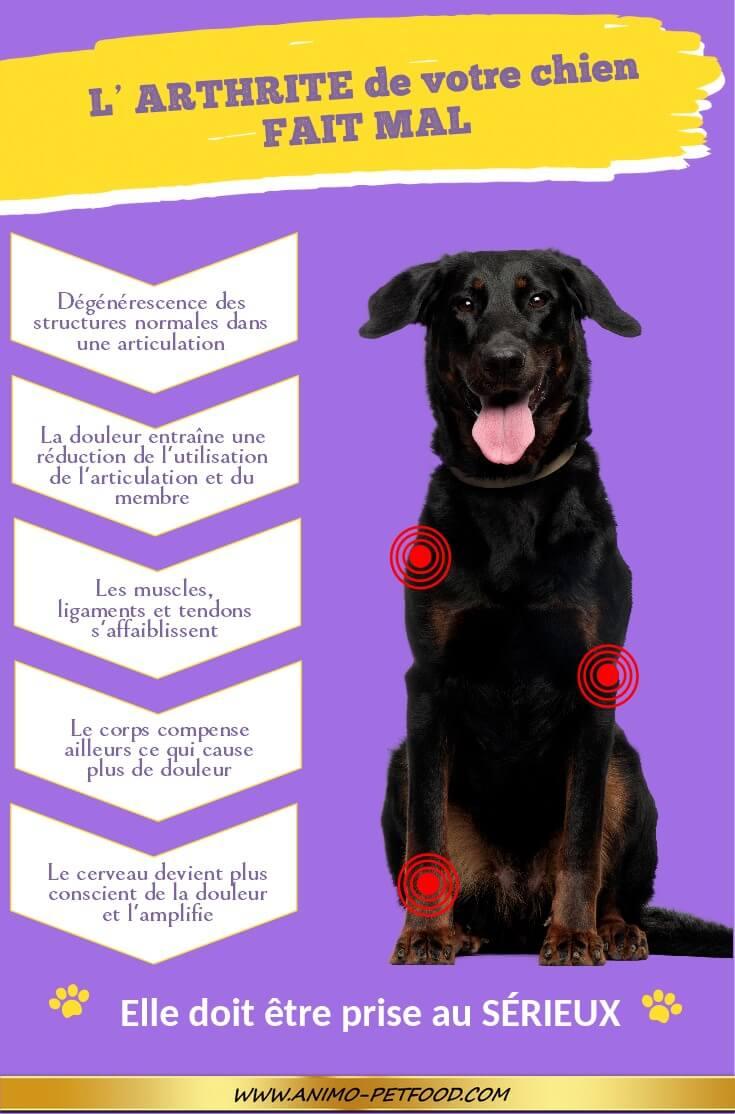 Chien Fait Ses Besoins La Nuit prévenir l'arthrite chez le chien