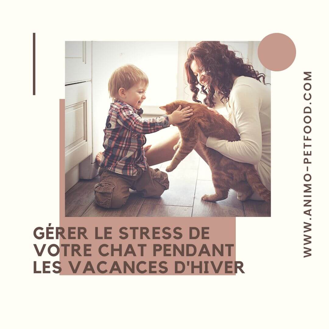 causes et signes du stress du chat