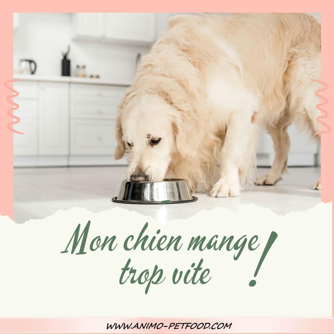 Aidez Moi Mon Chien Mange Trop Vite
