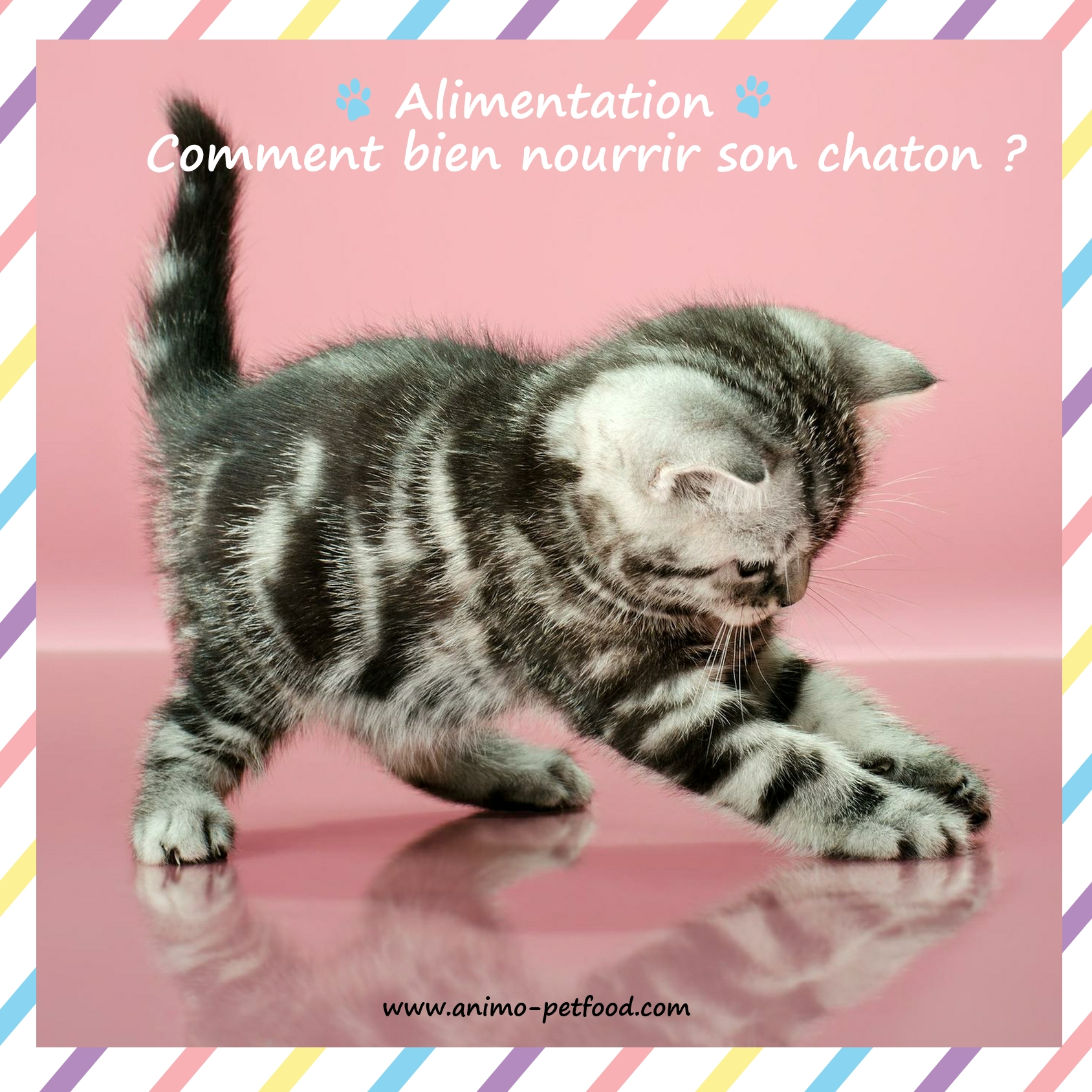 alimentation-comment bien nourrir son chaton