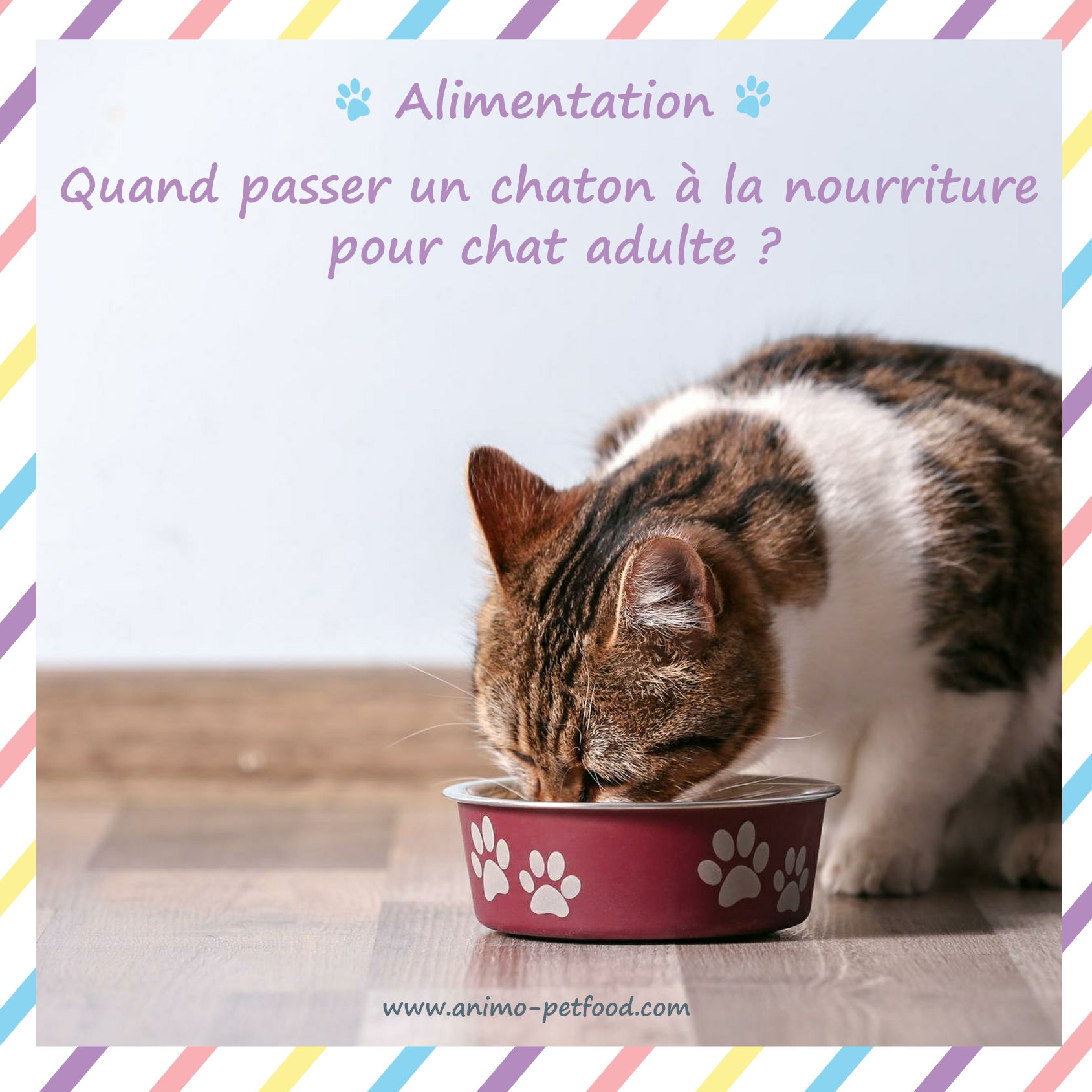sevrage du chaton - Alimentation du chaton - Alimentation - Chats- Alimentation chat adulte