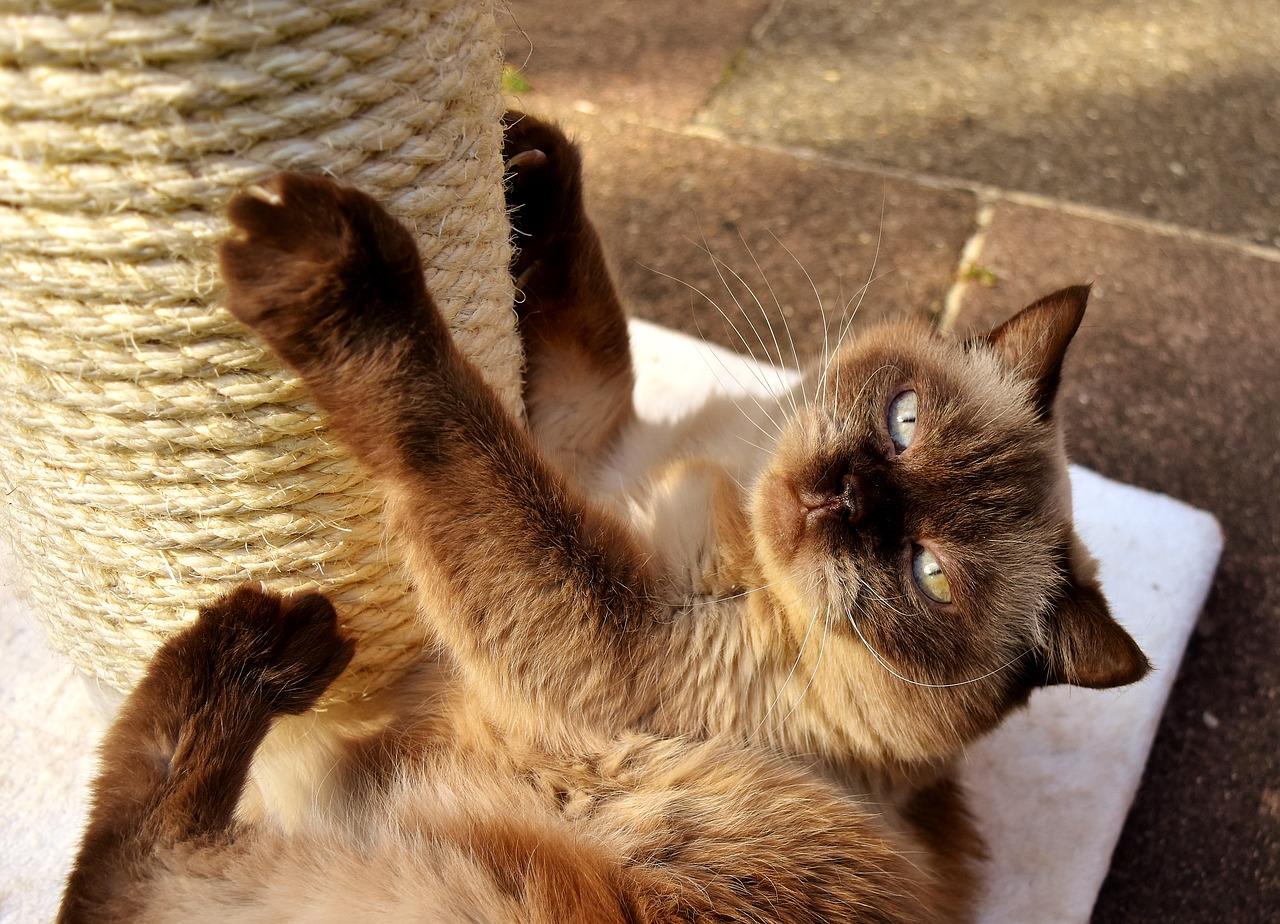 Protege Canape Pour Chat comment protéger votre canapé des griffes de votre chat ?
